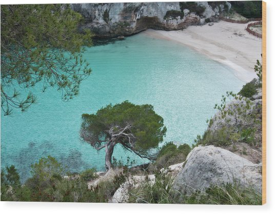 Macarelleta Turquoise Jewell By Pedro Cardona Wood Print