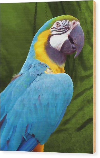 Macaw Wood Print by JAMART Photography
