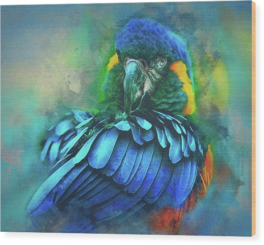 Macaw Magic Wood Print