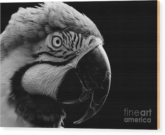 Macaw Parrot Portrait Black And White Wood Print