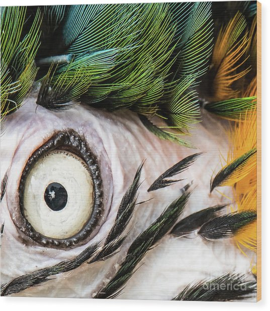 Macaw Up Close And Personal Wood Print