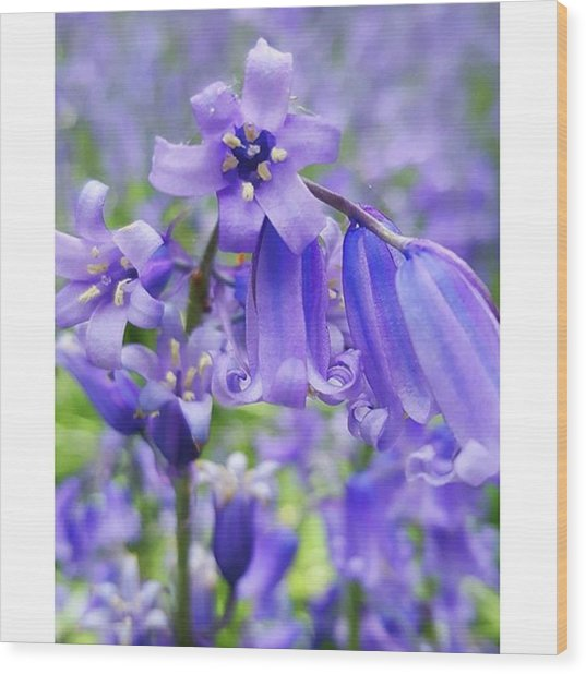 #macro #flower #flowers #bluebell Wood Print by Natalie Anne