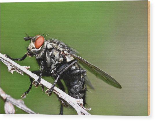 Macro Fly Wood Print