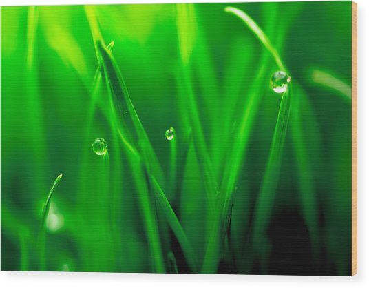 Macro Image Of Fresh Green Grass Wood Print