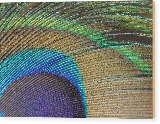 Macro Peacock Feather Wood Print