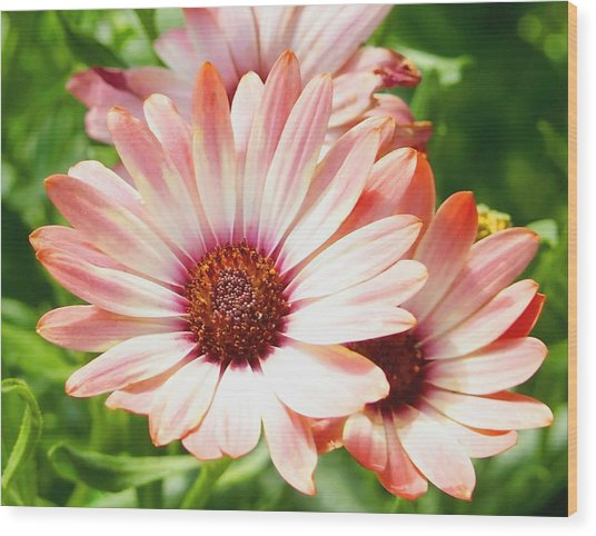 Macro Pink Cinnamon Tradewind Flower In The Garden Wood Print
