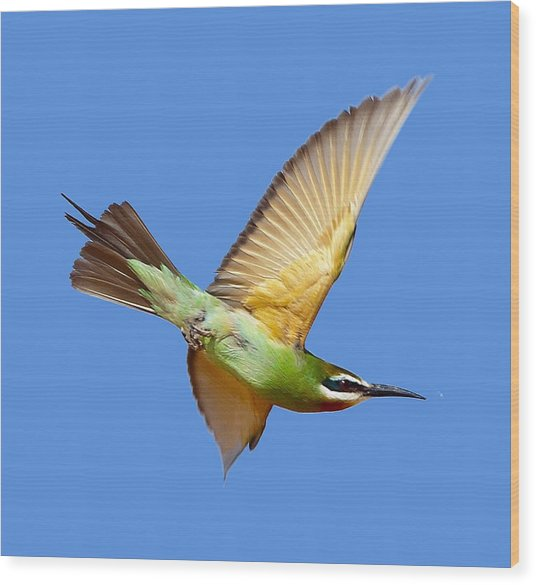 Madagascar Bee-eater T-shirt Wood Print