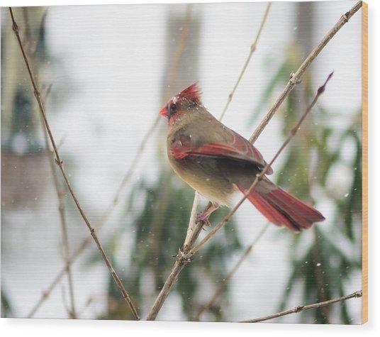 Madam Cardinal Wood Print