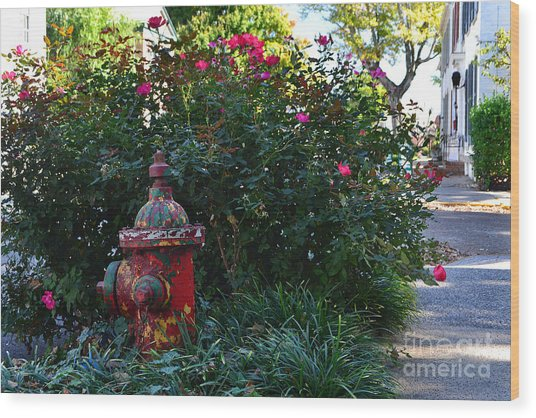 Madison Fire Hydrant Wood Print