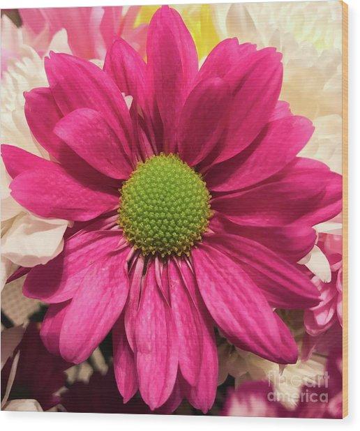 Magenta Chrysanthemum Wood Print