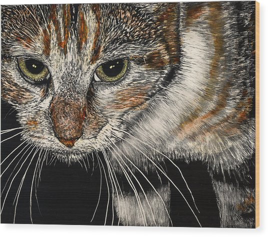 Maggie The Cat Wood Print by Robert Goudreau