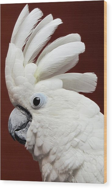 Maggie The Umbrella Cockatoo Wood Print