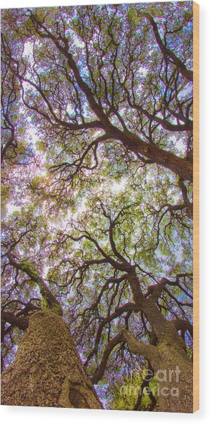 Magic Canopy Wood Print