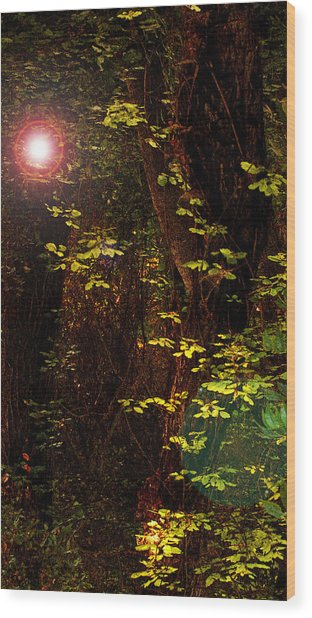 Magical Dark Woods Wood Print by Jean Booth