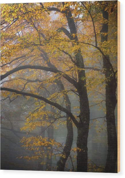 Magical Forest Blue Ridge Parkway Wood Print