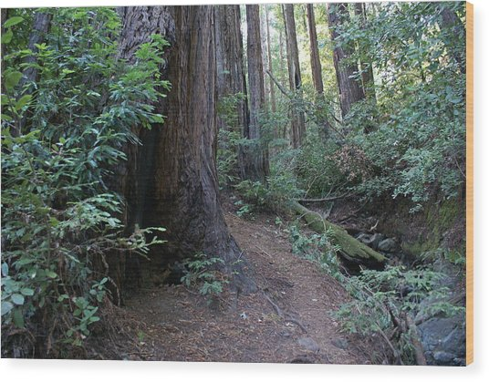 Magical Path Through The Redwoods On Mount Tamalpais Wood Print