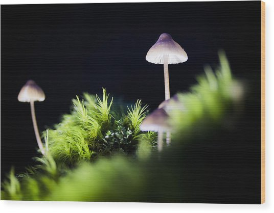 Magical World Of Mushrooms Wood Print
