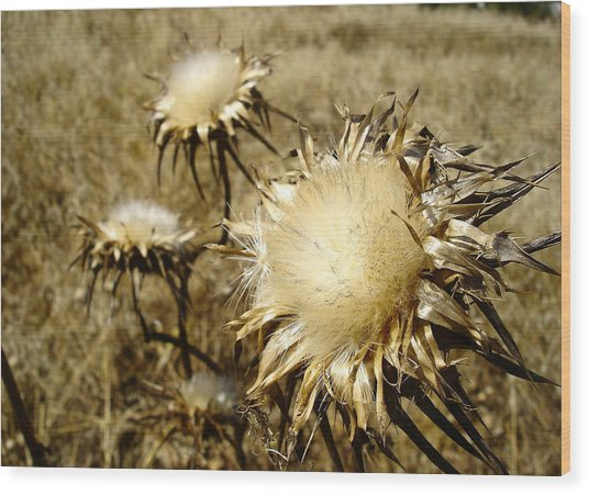 Magnificence - Departing Milk Thistles Wood Print