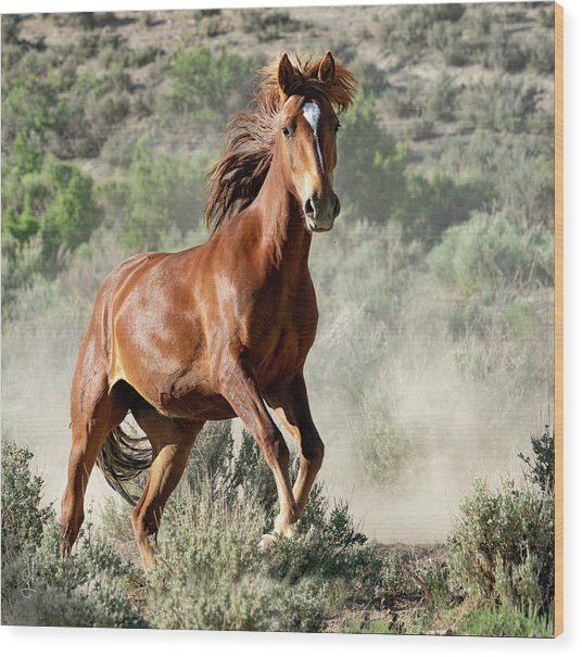 Magnificent Mustang Wildness Wood Print