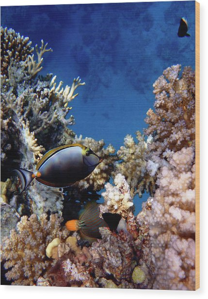 Magnificent Red Sea World Wood Print