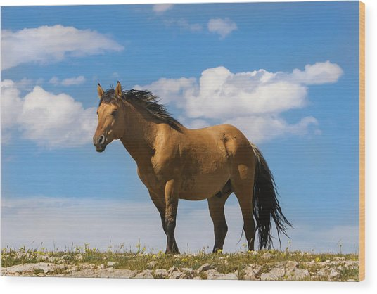 Magnificent Wild Horse Wood Print