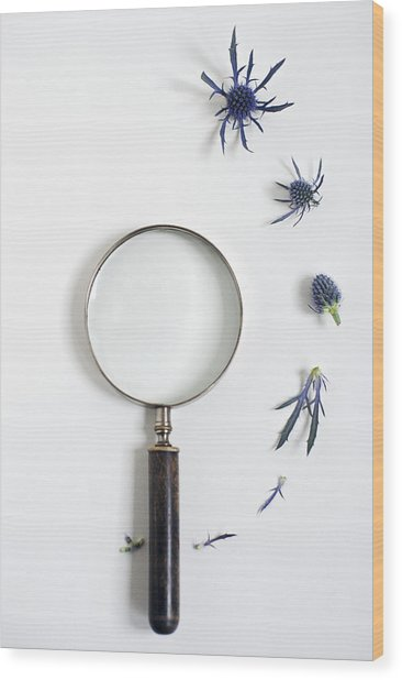 Magnifying Glass And Blue Thistle Wood Print