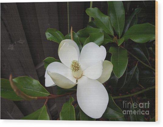 Magnolia 3 Wood Print