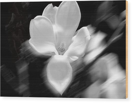 Magnolia Black And White Abstract Wood Print