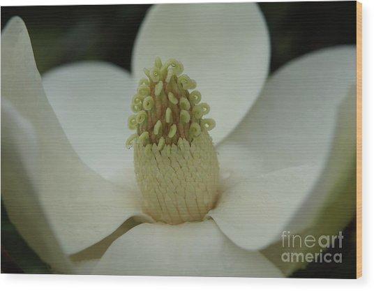 Magnolia Blossom 4 Wood Print