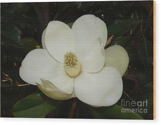 Magnolia Blossom 5 Wood Print