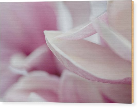 Wood Print featuring the photograph Magnolia Blossom by Jane Melgaard
