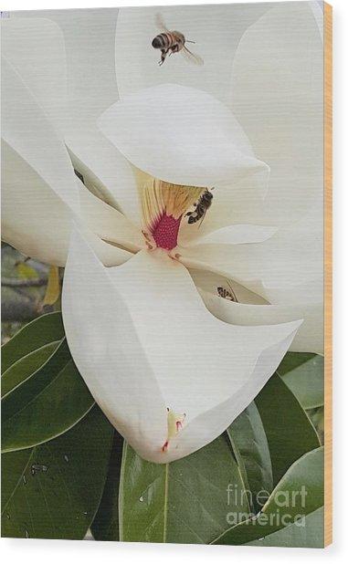 Magnolia Fans Wood Print