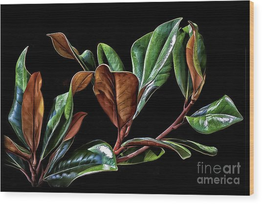 Magnolia Leaves Wood Print