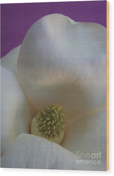 Magnolia Macro Against Purple Wood Print