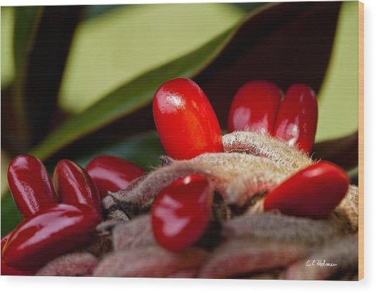 Magnolia Seeds Wood Print