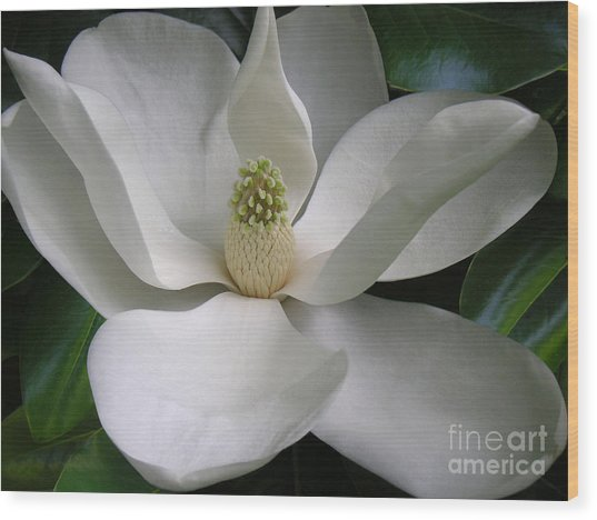 Magnolia Taking In The Light Wood Print by Lucyna A M Green