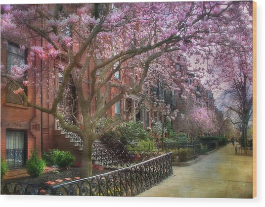 Magnolia Trees In Spring - Back Bay Boston Wood Print
