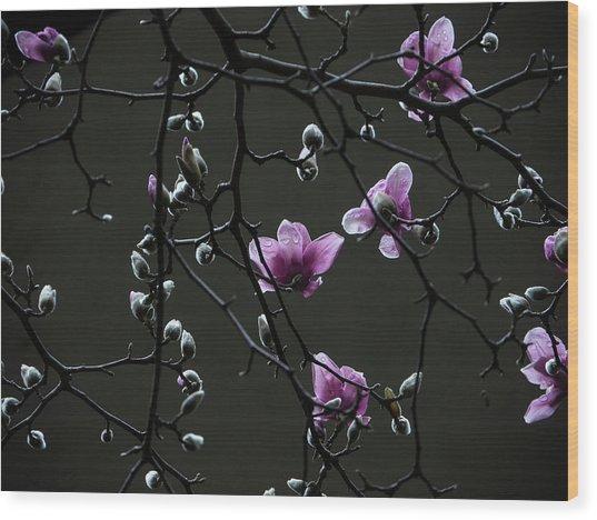 Magnolias In Rain Wood Print