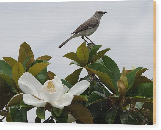 Magolia Bloom With Mocking Bird Wood Print by Julie Cameron
