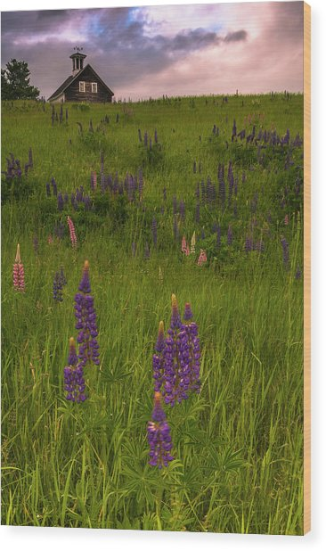 Maine Lupines And Home After Rain And Storm Wood Print