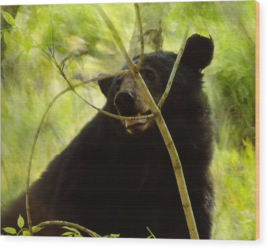 Majestic Black Bear Wood Print