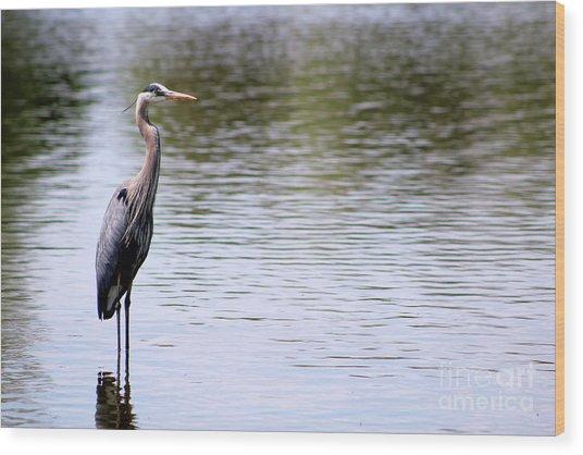 Majestic Great Blue Heron Wood Print