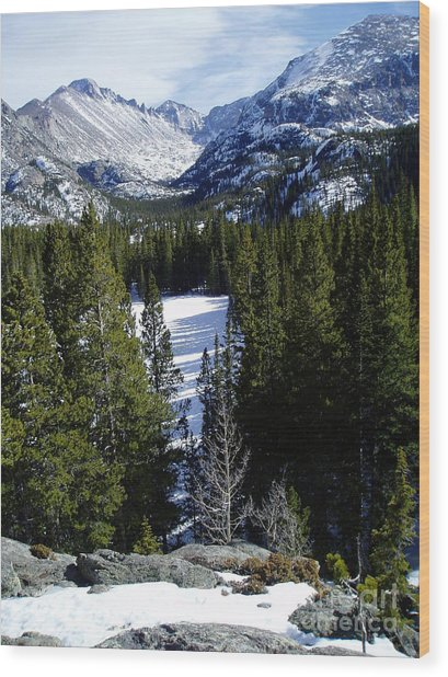 Majestic Wood Print by Lindsay Felty