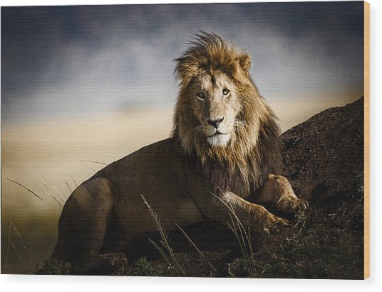 Majestic Male On Mound Wood Print