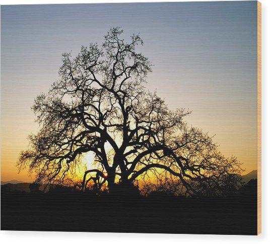 Majestic Oak Tree Sunset Wood Print