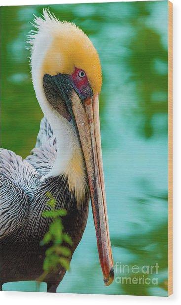 Majestic Pelican 48 Wood Print