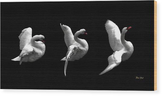 Majestic Swan Triptych Wood Print
