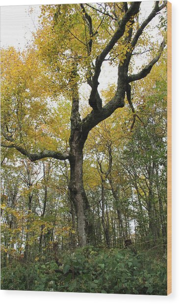 Majestic Tree Wood Print