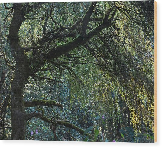 Majestic Weeping Willow Wood Print