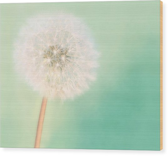 Make A Wish - Large Wood Print